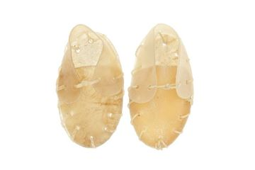 OS CHAUSSURE SMALL NAT.2PC 40G 12CM